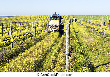 Tractors spraying the vineyard - Farmers with tractors...