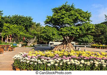 tradiční, číňan, květiny, zahrada, barvitý