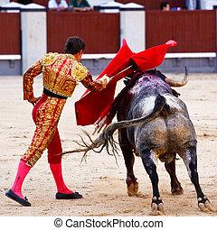 tradicional, corrida, -, toreo, en, españa