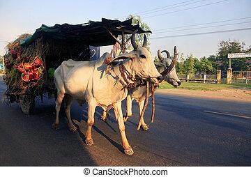 tradicional, desenhado, carruagem
