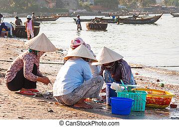tradicional, ne, clasificación, binh, colorido, conchas, mui, thuan, flotador, mollusks., costa, temprano, pescadores, aldea, barcos pesqueros, vietnam., mañana, coger, mercado, mujeres
