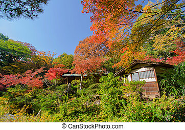 tradiotional, 家, againts, 日本の庭