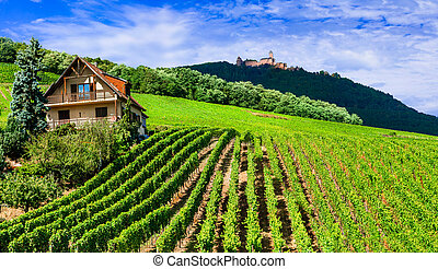 Traditioanl countryside in Alsace with vineyards France.