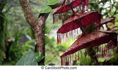 Traditional balinese triple umbrella - Beautiful red triple...