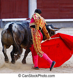 Traditional corrida - bullfighting in spain. Bulfighting has...