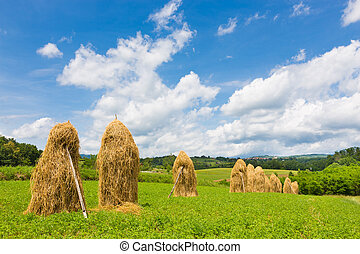 Traditional hay stacks on the field. - Bela krajina,...