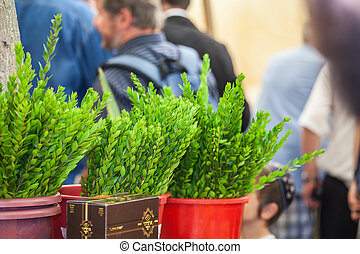 Traditional holiday of Sukkot in Jerusalem
