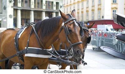 Traditional horse coach Fiaker in Vienna Austria -...