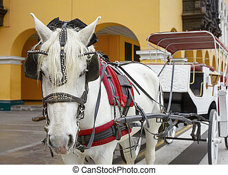 Traditional Horse-Drawn Vehicle in Lima, Peru.