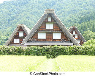 Traditional house in rice field