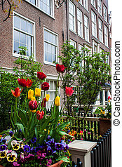 Traditional house with tulip garden in Amsterdam