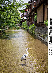 Traditional houses in Gion - Traditional old houses in Gion,...
