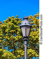 Traditional Lamp Post by Tree
