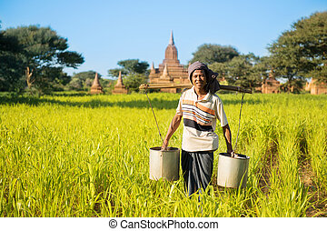 Traditional Myanmar farmer watering plant