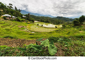 Traditional village with boat shaped roofs in the remote Mamasa Valley, West Tana Toraja, South Sulawesi, Indonesia.