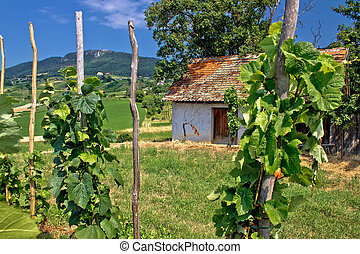 Traditional vineyard and cottage in Kalnik mountain area,...