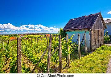 Traditional vineyard and cottage in Vrbovec, Prigorje region...