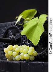 Traditional wine making. - Green grapes with leaves on black...