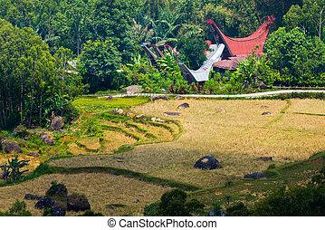 traditionnel, toraja, idyllique, village