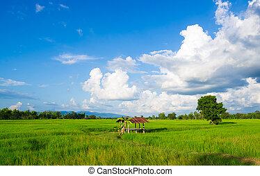 tradizionale, capanna, tailandese