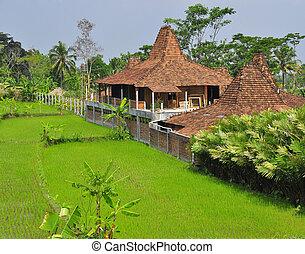tradizionale, casa, campo riso