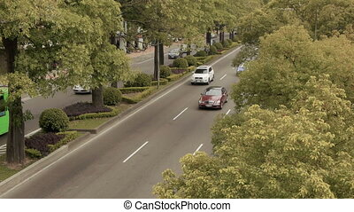 Traffic Trees Timelapse - A time lapse of traffic moving...