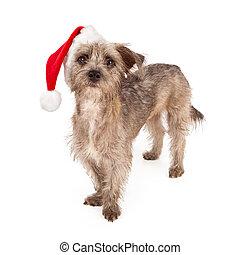 tragen, terrier, hut, hund, santa