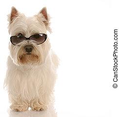 tragende sunglasses, westen, hintergrund, weißes, hochland,...