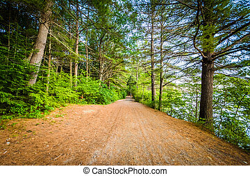 Trail along Winnisquam Lake, at Ahern State Park, in Laconia...