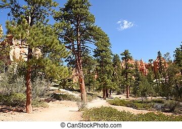 trail and trees in bryce canyon landscape