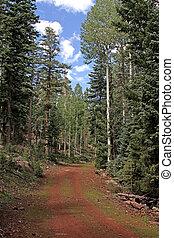 Trail at Pole Knoll White Mts AZ