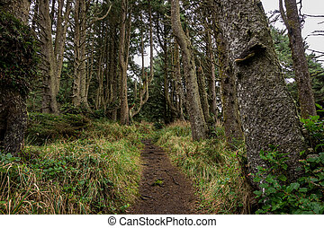 Trail Cuts Through Grassy Forest