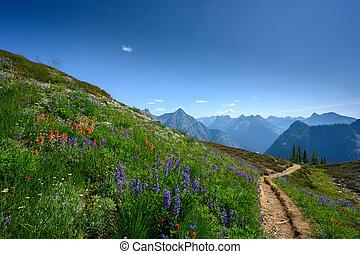 Trail Cuts Through Wild Flowers In North Cascades