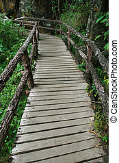 Trail for walking to learn the nature in tropical forest