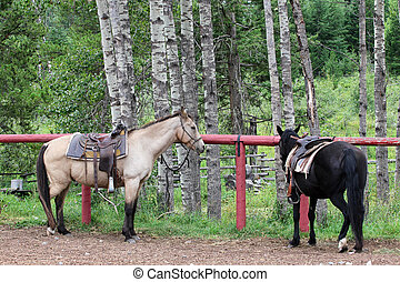 Trail horses - Two horses ready to go on a trail ride
