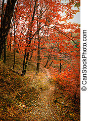 Trail in autumn  forest
