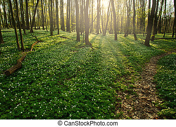 Trail in flowering green forest leading to the setting sun