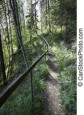 Trail in Forest with Railing