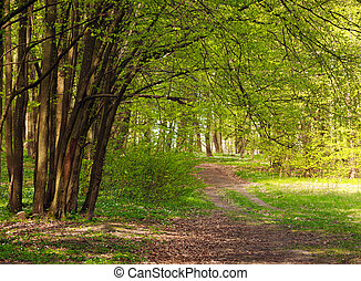 Trail in green blossoming spring forest, nature background