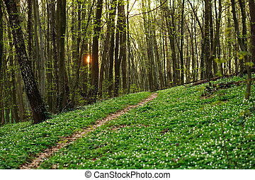 Trail in green spring blossoming forest, nature background