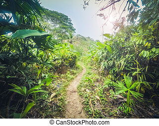 trail in jungle / dirt track through forest -