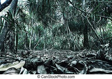 trail in jungles