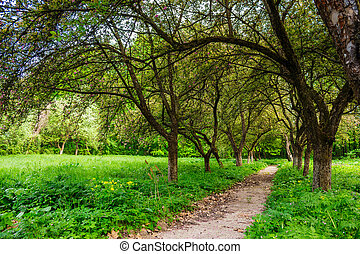 trail in morning garden - trail in the shade of fruit trees...