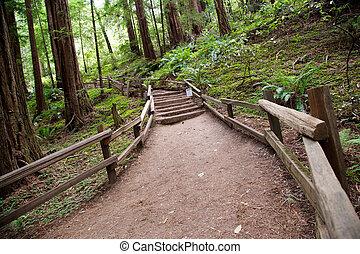 Trail in Muir Woods