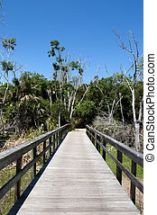 Trail in Park in Florida