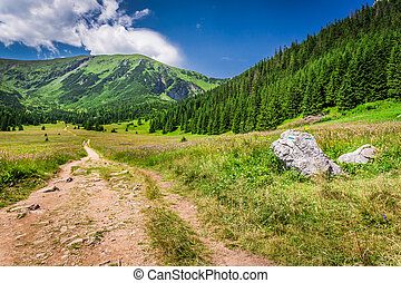 Trail in Tatras mountains in summer, Poland, Europe