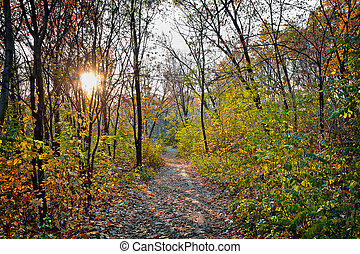 Trail in the autumn forest