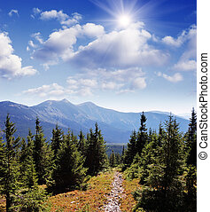 Trail in the mountain forest - Stone path in a mountain...