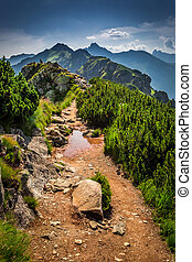 Trail in the mountains at summer