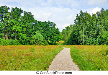 trail in the summer the park, blue sky